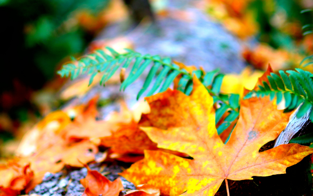50+ Free Stunning Fall Wallpaper Backgrounds for your iPhone or Android!